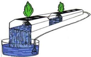 Kĩ thuật màng dinh dưỡng